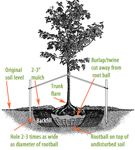 8741-tree-diagram_orig